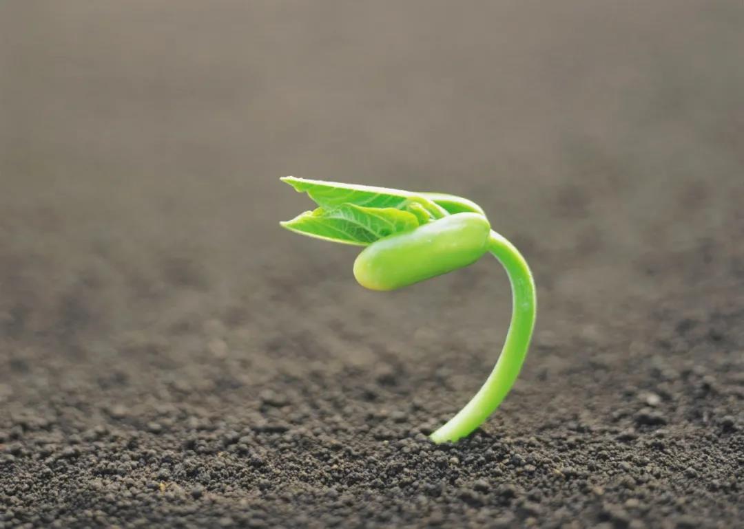 众筹·李欣频·黄种子年725玛雅调频课+《种子历》